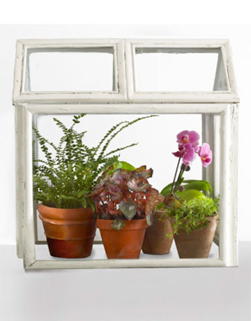 CLX-Photo-Frame-terrarium-12-0410