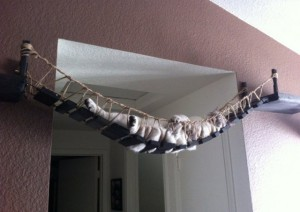 indiana-jones-style-cat-rope-bridge-xl-640x454
