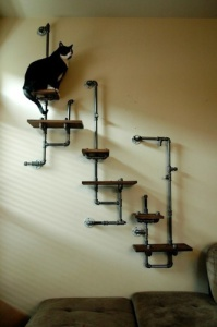 plumbing-shelves-with-cat